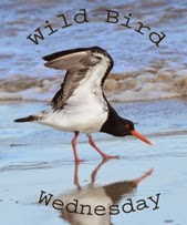 http://paying-ready-attention-gallery.blogspot.com/2015/10/wild-bird-wednesday-167-new-holland.html