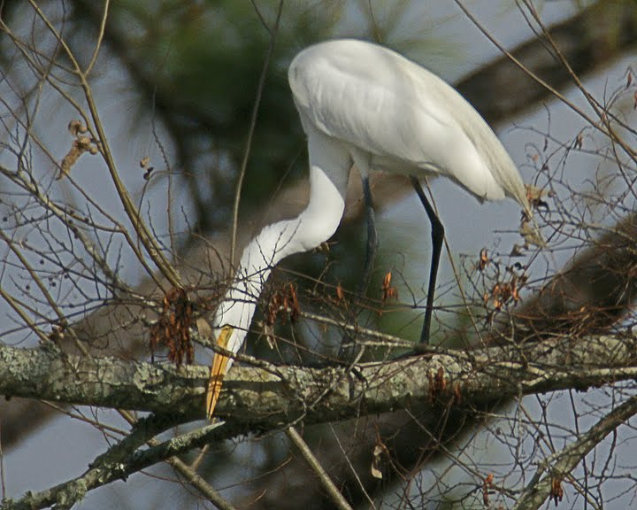 Louisiana Swamp Tours: Louisiana Swamp Tour Birds Can't Wait For ...