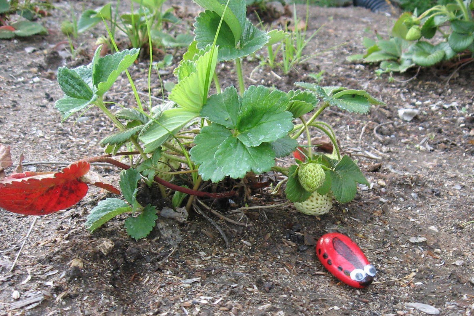 front yard garden recap  april  u2022 brown thumb mama u00ae