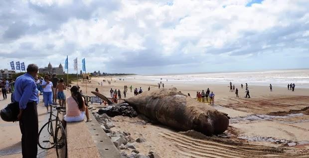 O enorme cadáver atraiu a atenção de muitas pessoas. Foto: Miguel Rojo/AFP