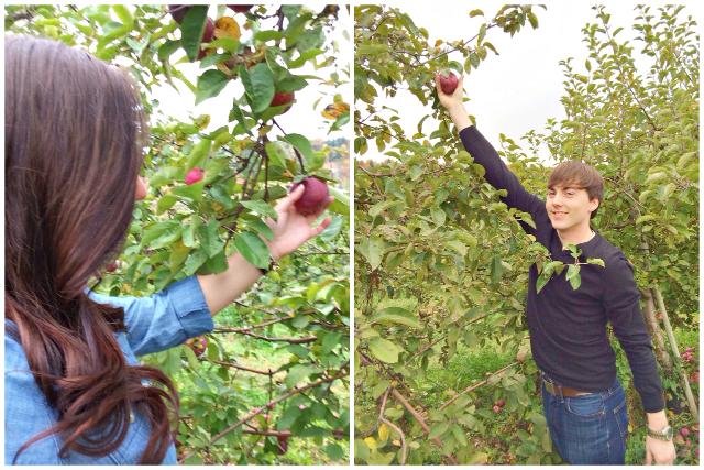 apple picking boston hill farm andover massachusetts