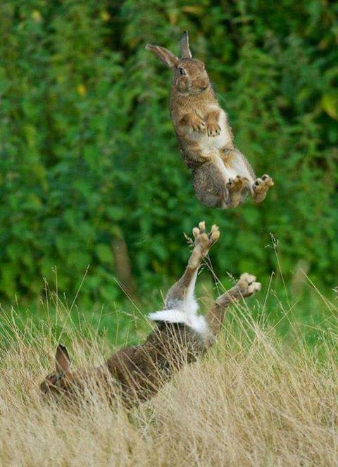 Jumping Rabbits