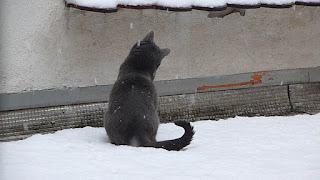 neige, site en refonte, chat, mignon, lol cat, grise, maya