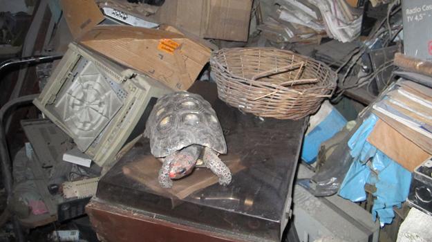 Família encontra jabuti sumido há 30 anos na bagunça de casa