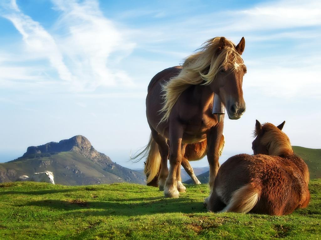 http://2.bp.blogspot.com/-HH0Hg8nUjL0/T4KjlSt8ArI/AAAAAAAABVA/1vRxUuldLk8/s1600/horse+mountain+by+maceme+wallpaper.jpg