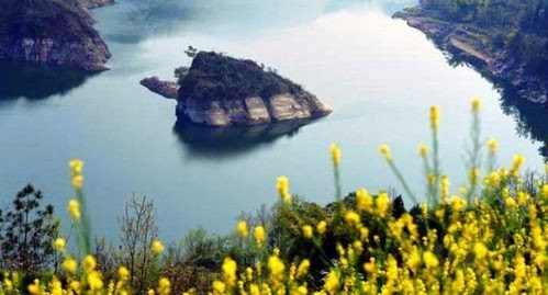 Aneh Pulau Seakan Kura kura Hanya Akan Muncul di Musim Bunga
