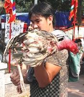 gambar ayam saigon kalah