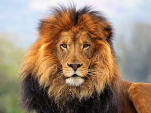 Löwe - Zeit