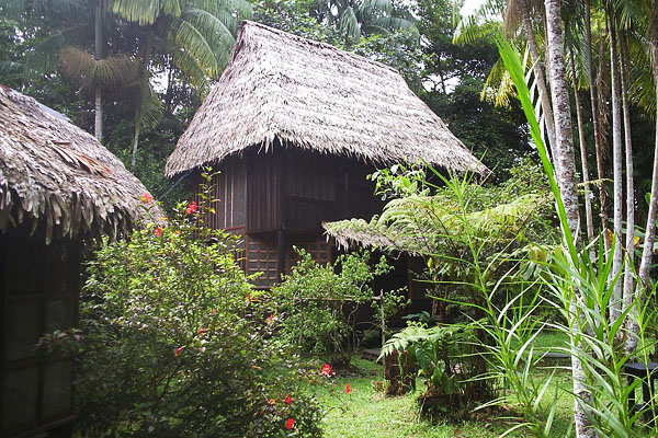 The little house in the jungle / la casita en la selva