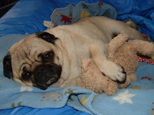 Pug with his Teddy Bear