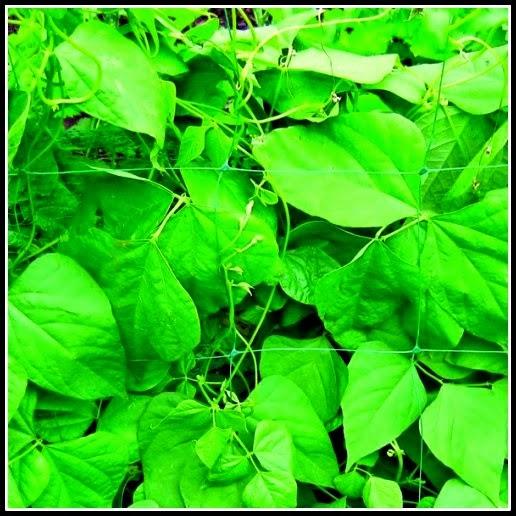 Plant net