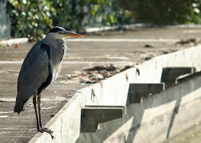 Heron by the Ecology Park