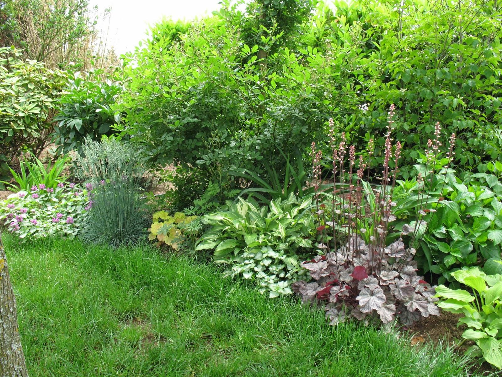 Roses du jardin ch neland boutures d 39 heuch res for Plantes et arbustes vivaces