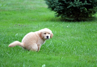 How To Potty Training A Puppy