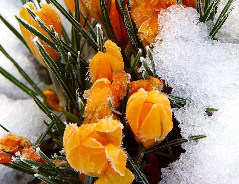Labocheck an lisis de agua consejos para regar las plantas en invierno - Plantas de invierno ...