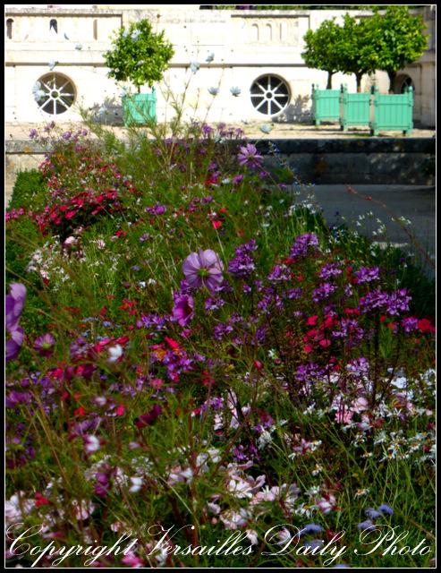 Flowers Petit Trianon Versailles