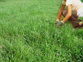 Le garden fundamentos de jardineria for Como plantar cesped natural