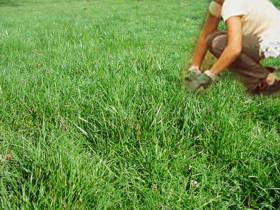 Le garden fundamentos de jardineria - Cuando plantar cesped ...