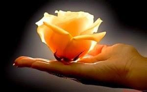 fot. Basia Solecka, Na płatkach herbacianej róży - wiersz Jolanty Marii Dzienis