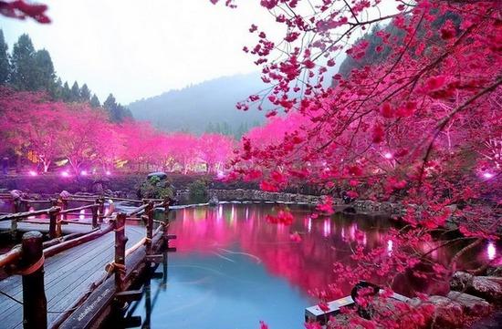 Melancong percuma ke Osaka Jepun bersama Sahajidah Hai-O Marketing melawat taman sakura