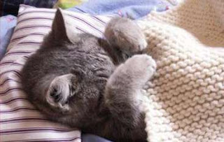 Fakta Tersembunyi Penyakit Flu kucing
