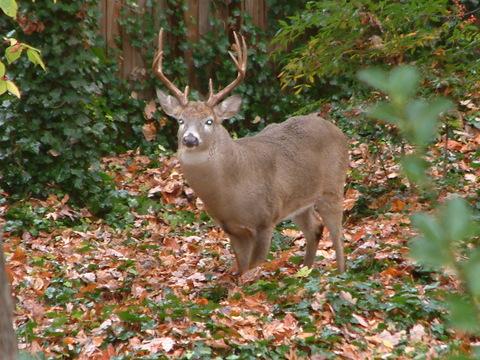 Favorite Deer Resistant Plants
