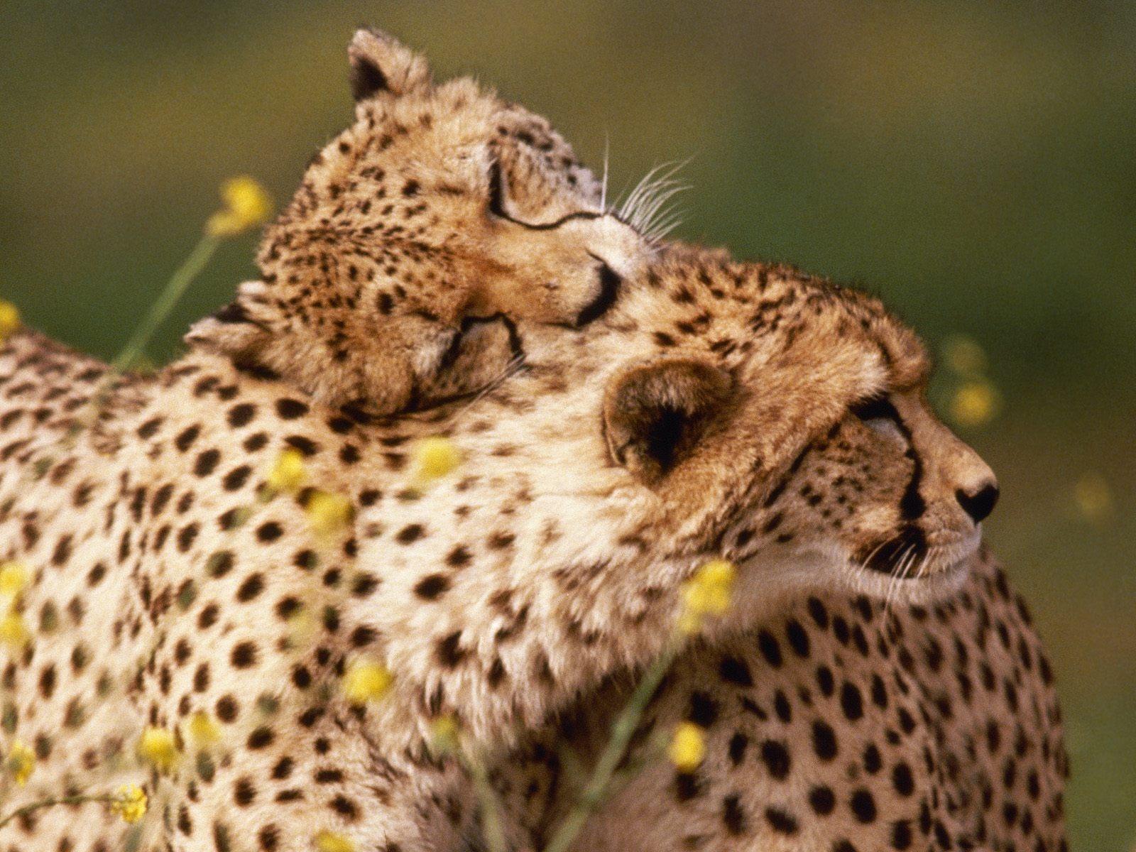 Hd hayvan resimleri hedza 281 29 hd kalitesinde hayvan resimleri