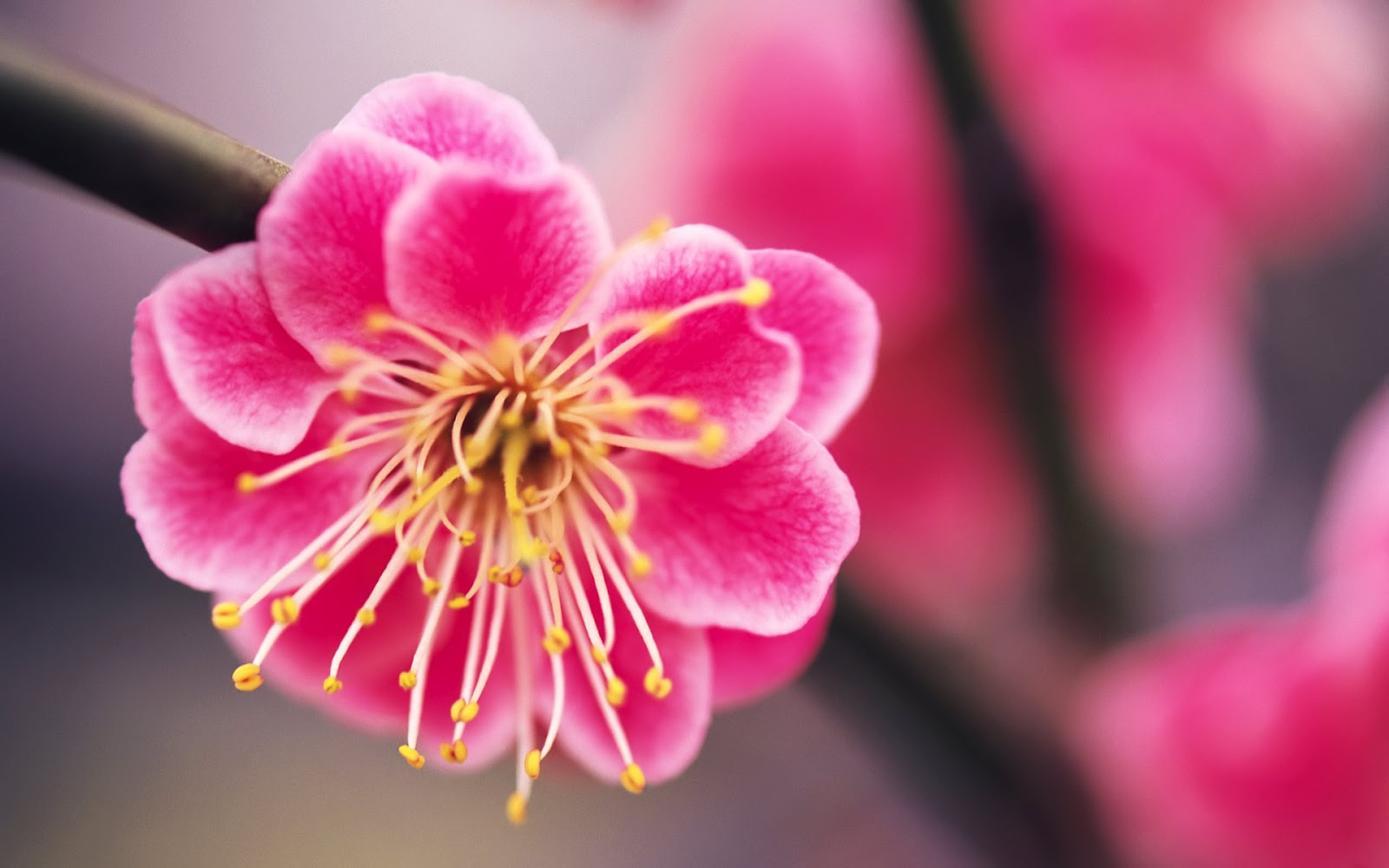 Beautiful flower pictures in the world izmirmasajfo Image collections