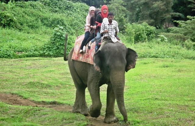 Objek Wisata Medan - Kebun Binatang Medan (Medan Zoo)