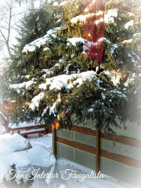 DIY Bird Seed Ornaments hanging on spruce tree with red ribbon