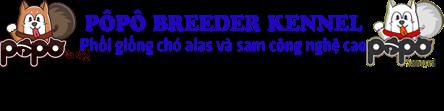 PÔPÔ KENNEL | Phối giống chó samoyed và chó alaska