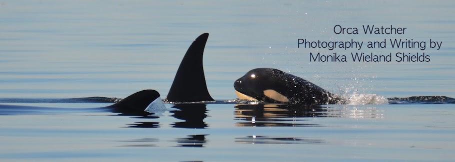 Orca Watcher
