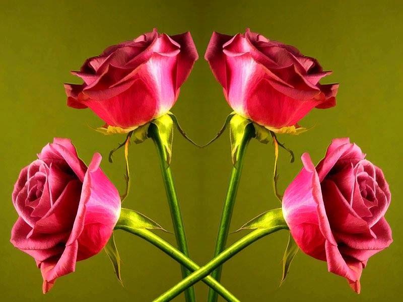 Best florist flower images wallpapers for online delivery