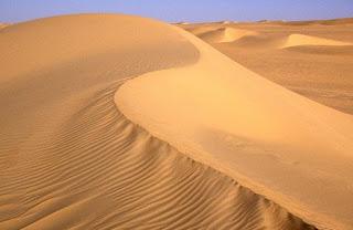 Bioma gurun pasir