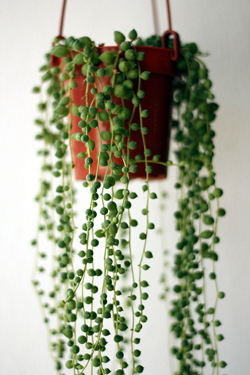 Somewhere I Would Like To Live String Of Pearls