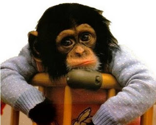 Monyet Galau