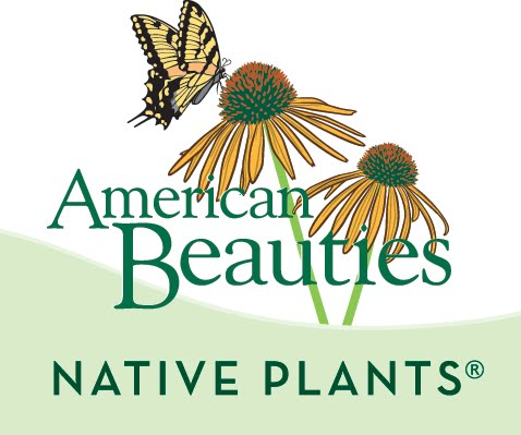 American Beauties Native Plants