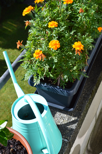adding pop up colours to your garden