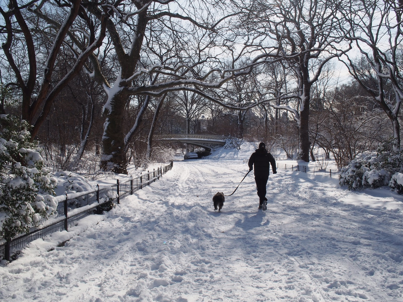 Walking the Dog, #centralpark #nyc #snow 2013