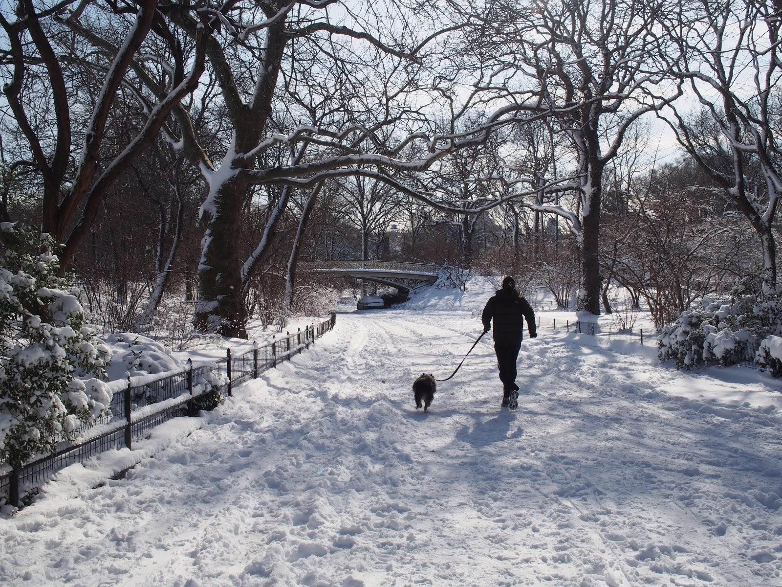 Walking the Dog, #centralpark #nyc #snow 2013