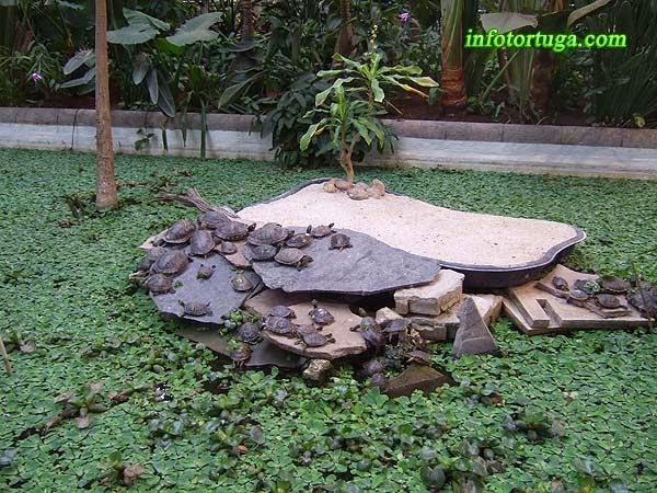 Una de las islas donde se asolean las tortugas de Atocha