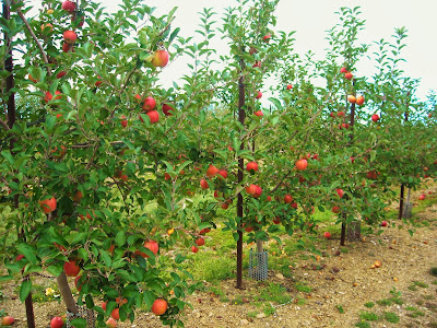 Ontelaunee Orchards