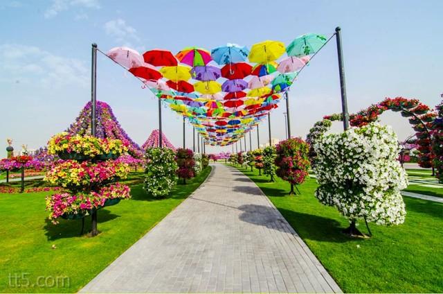 الحديقة المعجزة في دبيالحديقة المعجزة في دبي