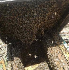 .Beekeeping Photos