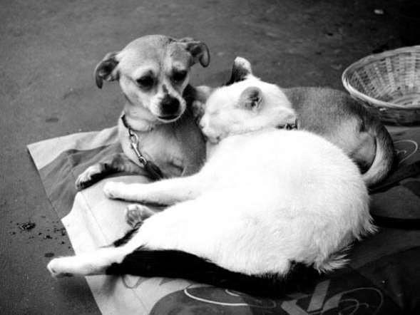 Gatos e cães são amigos