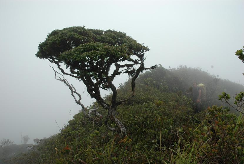 bon - Bonsai forest - Philippine Photo Gallery