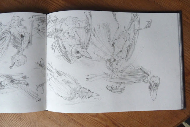 13 sparrows - pencil in Finding Out sketchbook