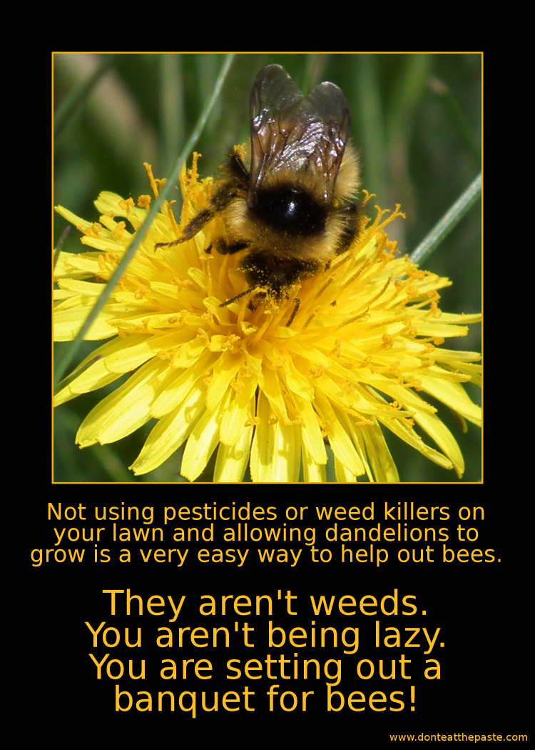 Dandelions for bees