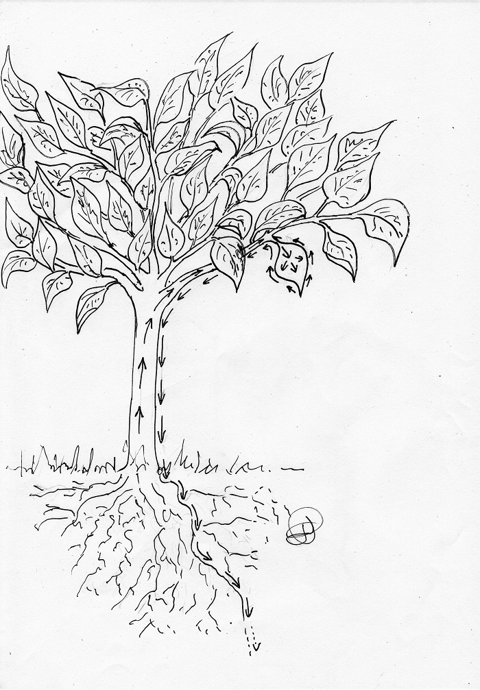 les secrets de la taille et de la greffe des arbres fruitiers bio les secrets de la culture et. Black Bedroom Furniture Sets. Home Design Ideas