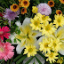 Colorful Different Flowers photos
